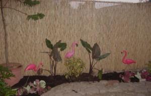 flamingos cropped