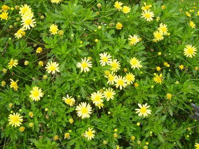 flowers 017