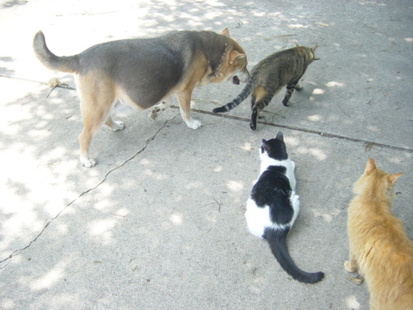 Sandy, Tigger, Scrawny and Honey