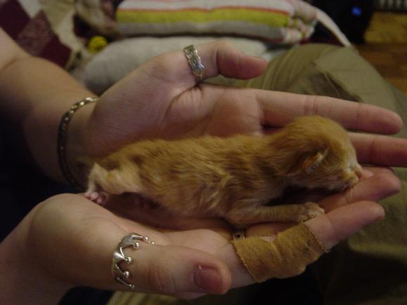 new kitten 2