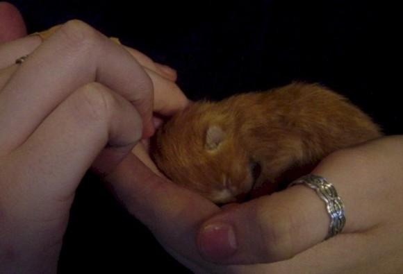 new kitten 5