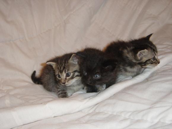 New kittens 001