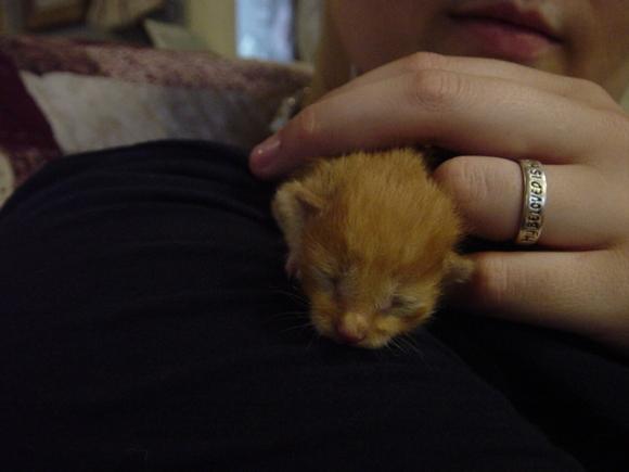 new kitten 3