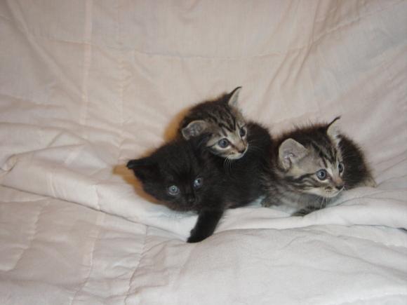 New kittens 003