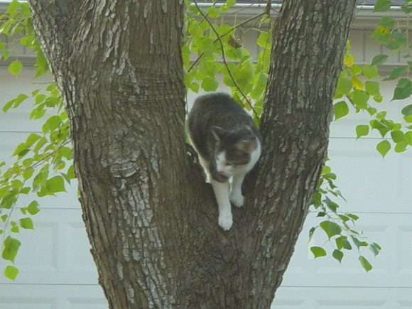 Cammy in the tree