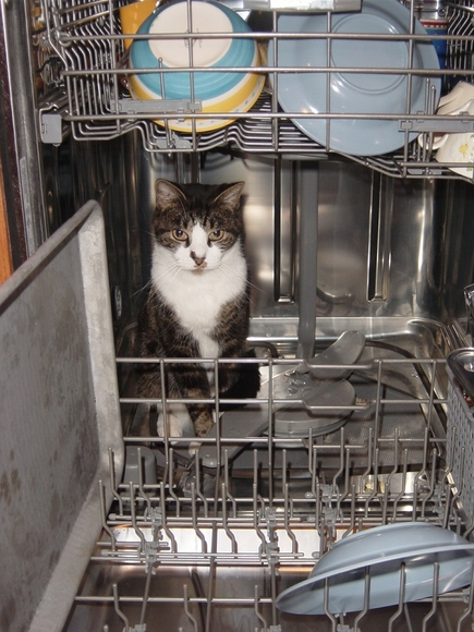 Whiskers in dishwasher