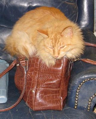 Honey's purse