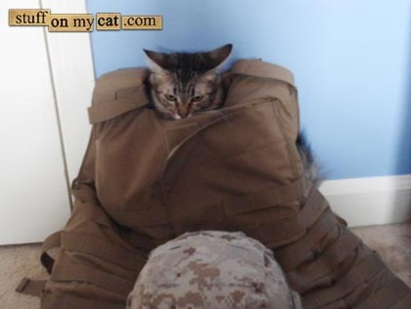 EOD Cat