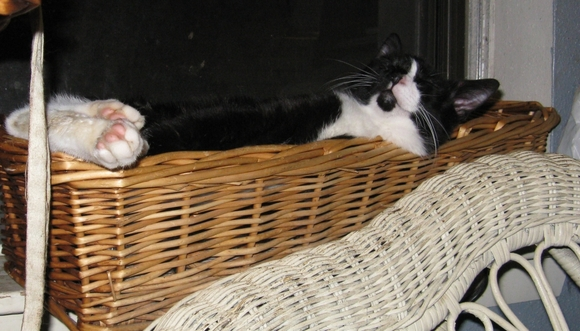 Domino the basket case
