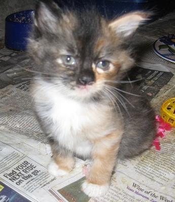 Rolly polly kitten