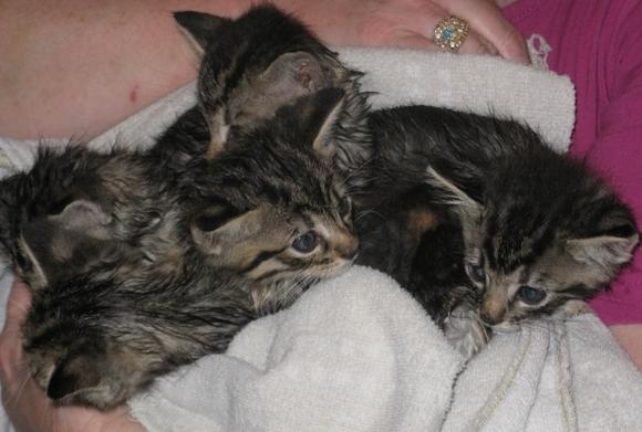 Wet kitties